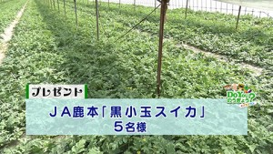 DoYouのうぎょう0612放送プレゼント